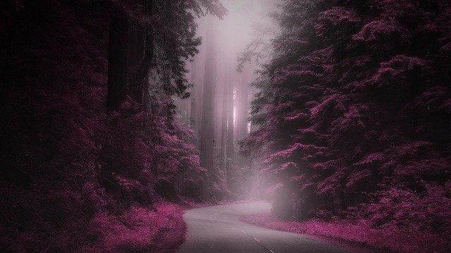 沒有正確的道路,只有自己的道路